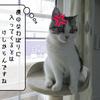 猫の道具 ~ひんやりジェルマット~