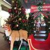 雑感/年中行事   〜クリスマスが今年はやってくる〜
