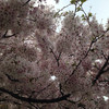 011-4_香川県/春の刀剣祭☆その4  にっカリーと笑う、高松松平&丸亀京極「名物」祭の巻(日帰り)