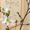 花を飾って、春を感じる