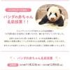 白浜の赤ちゃんパンダの名前は決選投票です!