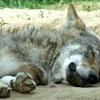 【睡眠】朝型か夜型かは生まれたときから決まっている