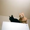 猫2匹とお引越し
