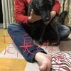 第150回甲斐犬愛護会展覧会とドッグショー不参加した件〜ズガビ━━Σ(ll゚艸゚ll)━━━ン!!