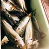 今が旬!青魚アジをおいしく食べよう
