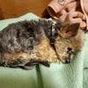 リン、狂犬病予防接種