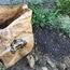 コンポスト腐葉土と種蒔き