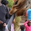 【ケニア】ナイロビ観光。サファリはやめて、あいつに餌でもやるか。