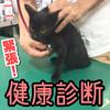 元ノラ子猫【すみ】を動物病院に連れて行って検査してきた!【ウイルス検査/ワクチンなど】