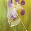 300字SS 『スミレの花咲くころ』お題:酒