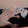 犬とメタボ