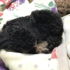 我が家の犬(豆助)の災難、再び 5月24,30日