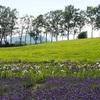 八紘学園の花菖蒲園、近隣の人にとっては行く価値あり!