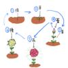 「人間」と「植物」の生命のサイクルは同じである。