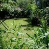 5月下旬晴天の庭