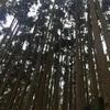 林業の間伐作業は最高のトレーニングです!