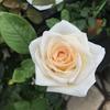 ルルは、すごくゆっくりなついている。薫乃の夏の花