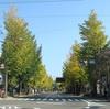 高尾駅~日影~小仏バス停 『台風19号から一か月、裏高尾を歩いてみた』
