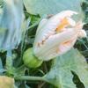 """畑からこんにちは! 0930   """" 秋植え野菜の観察日記始めました!☝️😆 """"   気長に楽しめる家庭菜園!秋植え野菜編"""