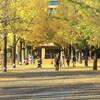 県庁前広場の黄色いじゅうたん
