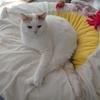 【57本目】麻痺していた猫様の尻尾が動いた!動いたよ!!