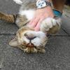 8月後半の #ねこ #cat #猫 その3