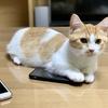 愛猫の写真だらけのiPhoneで、写真検索機能を使って遊んでみた