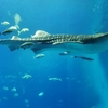 コロナ禍での沖縄美ら海水族館の混雑状況レポート2020年10月