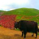 2017年6月の東チベット旅行のブログ