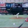 2017 126th game@東京ドーム vs S