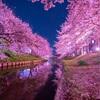 桜旅 奈良編
