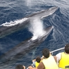 捕鯨継続の意義とは?