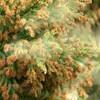 花粉症から見える「認識が世界を変える 」ということ