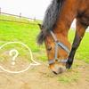 【競馬】G1馬8頭の天皇賞(秋)、渋った馬場でスパッと切れる馬は?