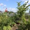 真夏の屋上庭園に蝉が来ました