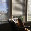窓際の柴犬さん