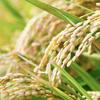 知らなきゃ損!農家オススメ「ごはんを美味しく食べる方法」1.どこでお米を買うか?