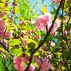 桜の時期は終わってしまったけれど、清澄庭園へ行ってきました
