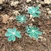 【花壇】手間はかかるが種から育てるのがおトク!