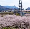 第14回宮ヶ瀬桜まつり 4月6日(土)~14日(日)開催
