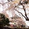 100年の計と桜とお城、弘前に行って来た