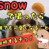 SNOWで撮ったら誰でもかわいくなることを証明するぞっ!