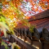お寺と紅葉
