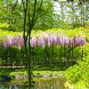 本土寺  広い境内には いつも花が