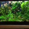 Profit of having a 20 gallon planted fish tank in your home