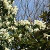 こんな時は花でも〜神代植物公園の山野草と寒緋桜など。