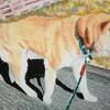 黄金の犬 - 2021年2月11日の日記