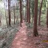 地元の森に入ってみました(2)