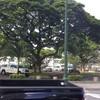 ハワイ税関