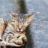 猫も廃墟も楽しめる!台湾の侯硐(ほうとん)に行ってきました